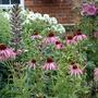 Garden_210709_013