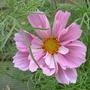 Garden_210709_019
