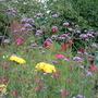 Garden_210709_012