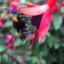 Bee_covered_in_pollen_BEST.jpg