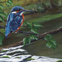 Kingfisher_new_scan_16_aug_2009