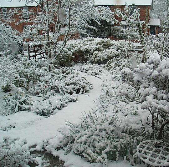 Front_garden_under_snow.jpg