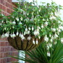 white fuschia basket with corderline