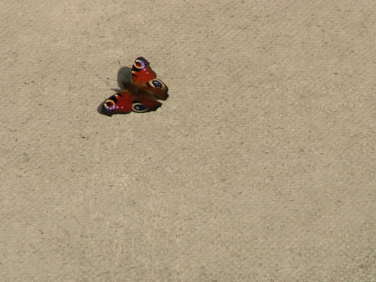 butterfly worshipping the sun