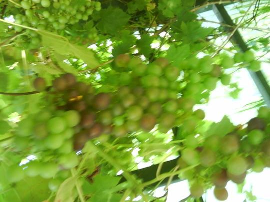 Grapes__2_.jpg