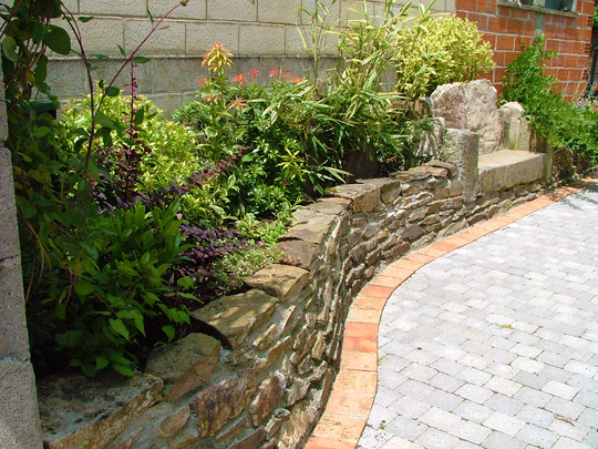 stone seat and raised beds (Skimmia japonica (Skimmia))