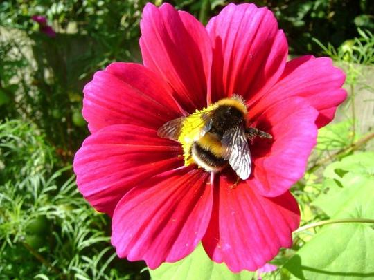 Bumble in cosmos.