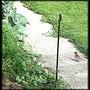 Sparrowfledgling