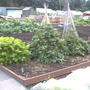 My_allotment_277