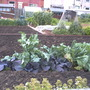 My_allotment_281