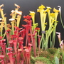 Carnivorous Plants display - Southport Flower Show 2009