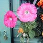 Pink_petunias