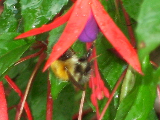 A bee out in the rain