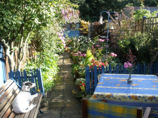 The teeny weeny garden that is my haven!