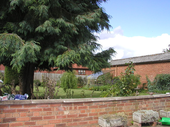 Some of the garden