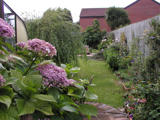 Some of the garden