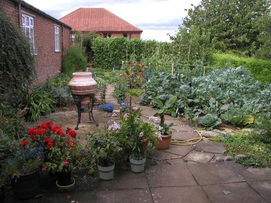 My untidy veg garden