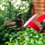 More Hummers