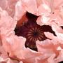 007_dorothy_clive_gardens_2_jun_09