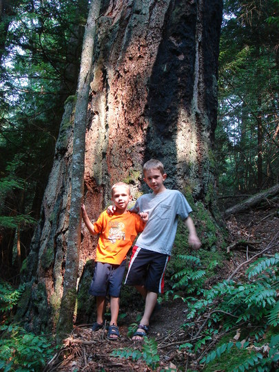 Dominic and Cameron...and the really big tree!