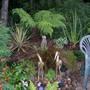 Wooded Garden