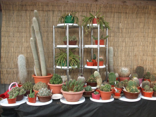 cactus collection