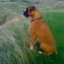 Harvey on the golf course