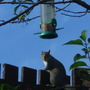 Squirrel on my motheaten cherry tree