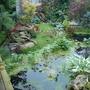My back garden August 2009