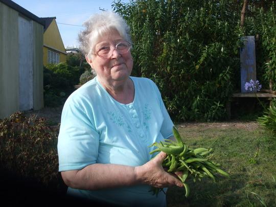 my mam Val picking our runner beans