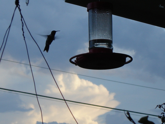 Humming Birds are here!