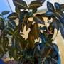 Monkey_plant_spr_08