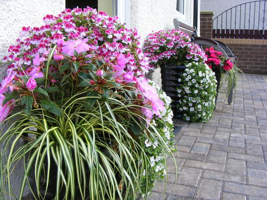 Planters at the front door..