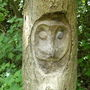 Owl carving on a tree