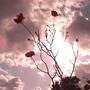 Roses_sun_and_sky_3.jpg