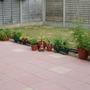 My back garden - 1