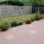 My back garden - 2