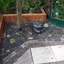 Houseleeks, gravel garden
