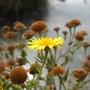 Wild_flower_1.jpg