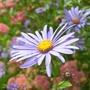 Flowers_2_London_Wetlands.jpg