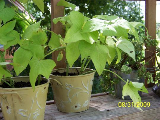 Weekend deals... 29 cent planters!