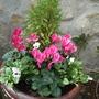 Re_planted_pot