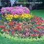 Flower_bed_near_bus_station_2009_08_17