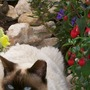 Puss amongst the flowers