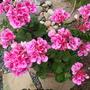 Pot_of_flowers