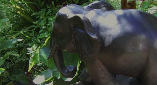 Tembo. (Nellium elephanteum)