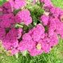 Our_garden_172