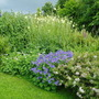 Bottom_of_garden_2