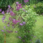 Garden_3_