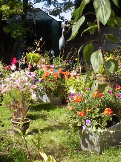 garden sept 2009